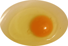 egg.gif